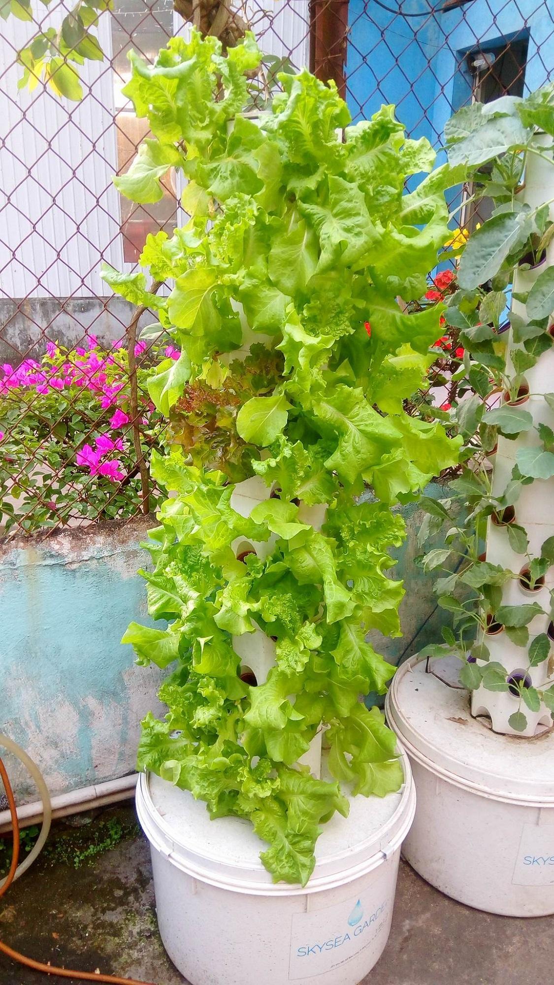 Trụ khí canh trồng rau sạch 36 rọ cây - Skysea Garden