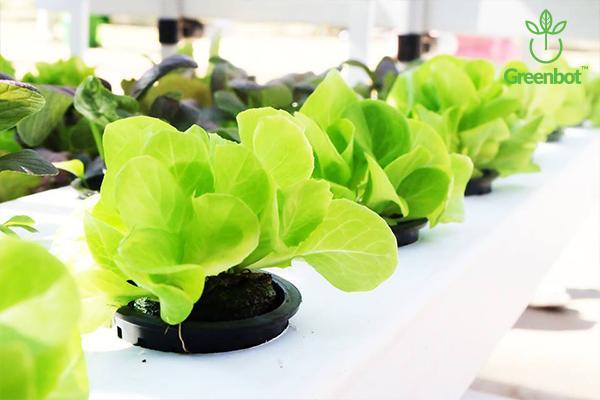 50 Rọ trồng rau thủy canh, kích thước 58x 60x 38mm ( Dài x cao x rộng)  + 50 Viên nén xơ dừa