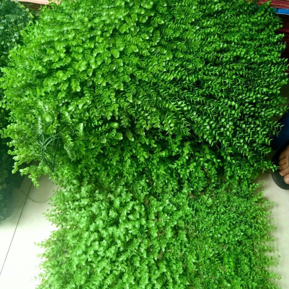 COMBO 5 tấm Cỏ Tai chuột treo tường