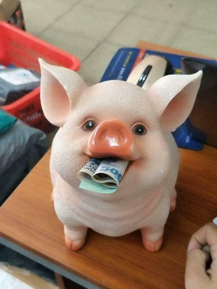 Lợn sứ siêu kute cho trẻ em
