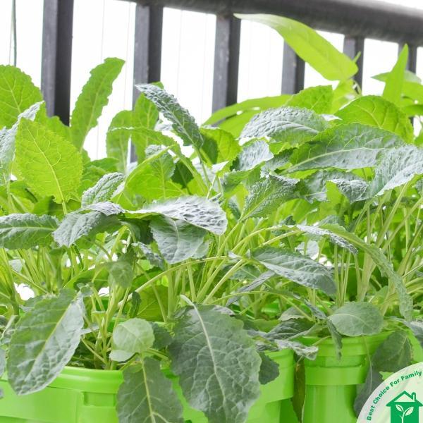 Thiết bị trồng rau thuỷ canh