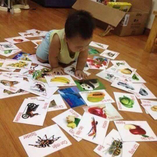 Hình ảnh Bộ thẻ học Bibo 16 chủ đề 415 thẻ học thông minh cho bé
