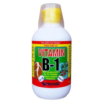 Bộ 2 Vitamin B1 cho hoa lan