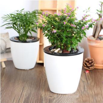 [BV] Bộ 1 chậu cây tự động tưới nước trắng tặng 1 gói phân trùn quếtrồng cây