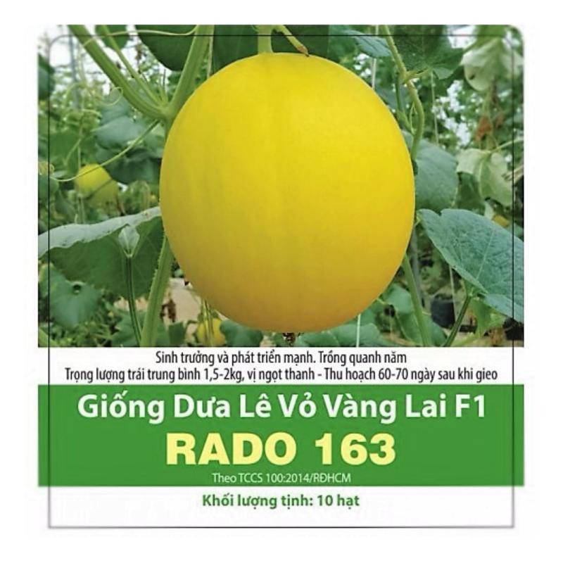 Giống Dưa Hoàng Kim Lai F1 -RADO163
