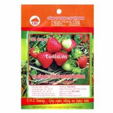 Hạt giống Dâu tây quả to (CH)