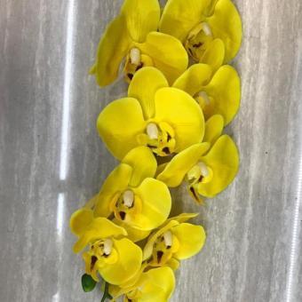 Hoa lan vàng