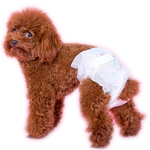 ... Dogs only diapers (l) - intl ...