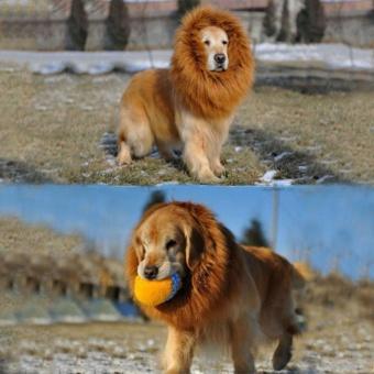 Lion Mane Wig Pet Dogs Halloween Festival Fancy Fun Dress Cute Warm Brown Size L - intl