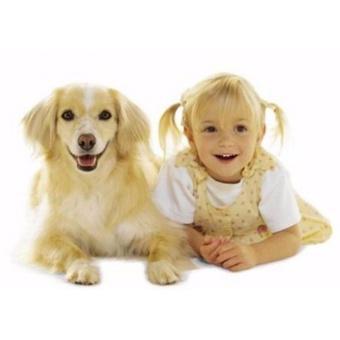 Thú cưng: Tinh dầu Oải hương 100ml làm thơm cho thú cưng